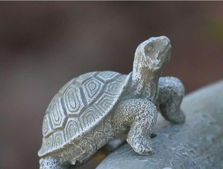 Curious Turtles Solar Fountain and Bird Bath